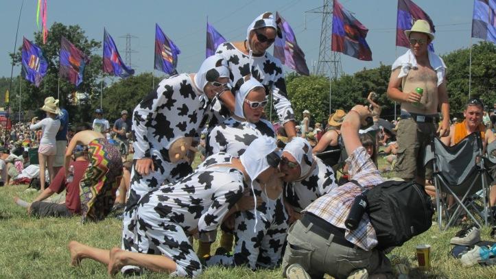Cows by MojoBaron