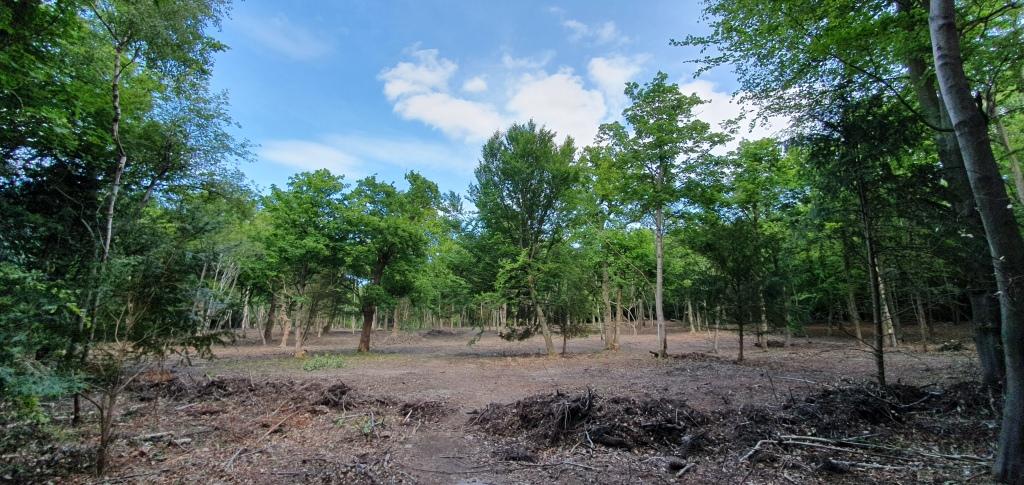 Coombe Wood1