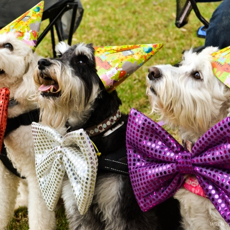 Alic's first birthday party