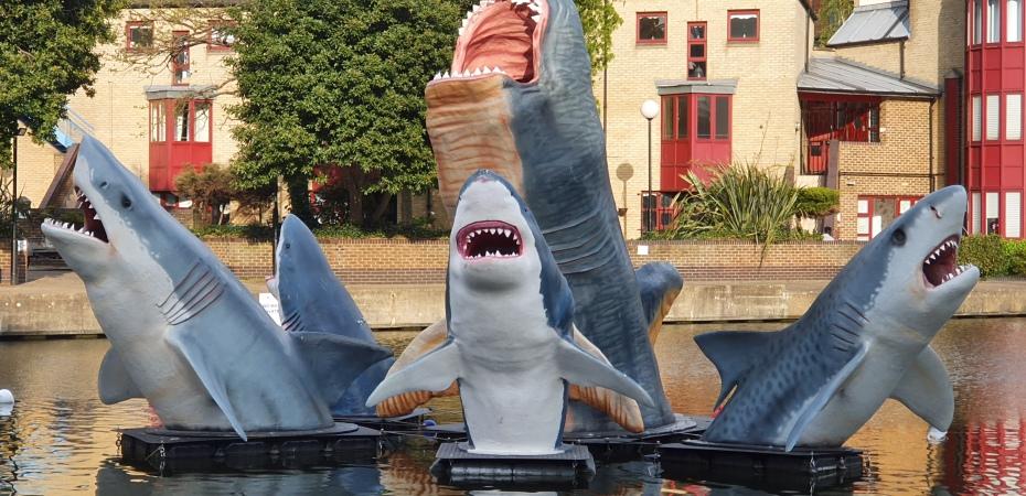 Fibreglass sharks on the Regent's Canal